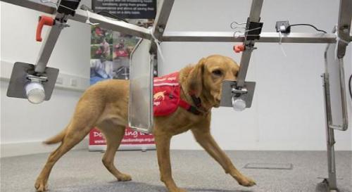 بلدة يابانية تستخدم الكلاب للكشف عن السرطان