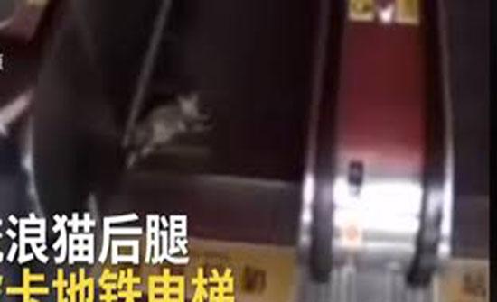 قط مشاغب يحشر ساقيه في سلم متحرك داخل محطة مترو (فيديو)