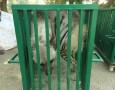 بالصور : ضبط ذئاب وضباع وثعالب في مزرعة خاصة في البلقاء