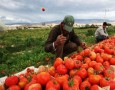 الزراعة: الغاء الرسوم على الصادرات الزراعية حتى نهاية العام