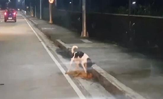 بالفيديو : كلب ضال يثير مشاعر المارة بمحاولة إنقاذ صديقه الميت