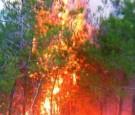 اخماد حريق مفتعل لمستنبت حرجي في اربد