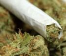 ضبط كمية كبيرة من الماريجوانا في الرمثا