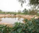 وفاة اربعيني غرقاً ببركة زراعية في الشونة الجنوبية