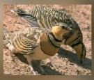 ضبط صيادين عرب قتلوا عشرات الطيور جنوب الرويشد