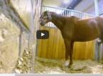 بالفيديو : صاحب إسطبل وضع كاميرا لرصد حصانه.. والمفاجئة!