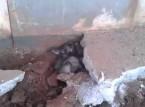 فيديو مدهش | شاهد ماذا وجدوا بعد تكسير الارضية !