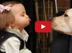 شاهد الصداقة بين الاطفال الكلاب