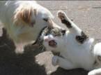 شاهد | كلب يضبط قطة ويعيدها للمنزل!