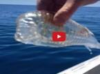 بالفيديو  : أغرب الظواهر الطبيعية فى المحيطات !
