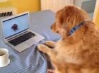 شاهد... ماذا يفعل هذا الكلب على اليوتوب ؟