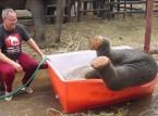 فيديو طريف.. فيل صغير يلهو في حوض ماء كالأطفال