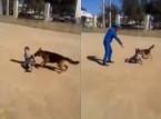طفل يصيبه الرعب بعد تحريض كلب عليه
