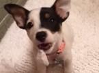 فيديو : كلب يثير فوضى بمرحاض صاحبته