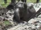 شاهد: كيف تم إنقاذ فيل علق في منطقة طينية؟