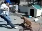 """كلب """" بيت بول """" يقطع رباطه و يهاجم رجل أغضبه"""