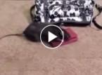 شاهد.. فأر يسرق نقودا من حقيبة امرأة