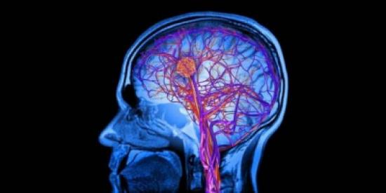 بالفيديو.. كيف تتحرك الأفكار عبر الدماغ؟