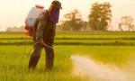 """مزارعون يطالبون بإدخال مبيدات """"طعم السيرونك"""" تحت نظام المكافحة المتكاملة"""
