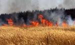 إخماد حريق أعشاب جافة في عجلون