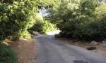 الأردن یفتقر لبحوث ودراسات حول المساحات الخضراء