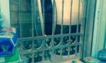 حادث سير غريب في عمان (صورة)