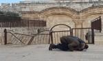 بالفيديو  : بعد جهود اردنية .. الاحتلال يزيل الأقفال الحديدية عن باب الرحمة