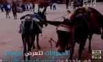 شاهد بالفيديو : ضرب الخيول والحمير في البترا يغضب منظمات حقوق الحيوان