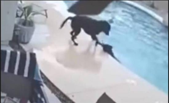 بالفيديو.. كلبٌ ينقذ صديقه من الغرق!