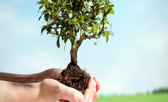 زراعة عجلون تحتفل بيوم الشجرة