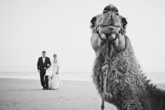 حيوانات حولت صور حفل الزفاف إلى ذكريات مختلفة ومميزة للعروسين فى ليلة العمر.