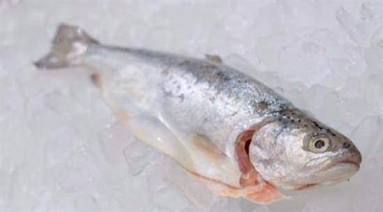 لا تخزّن الأسماك في الثلاجة قبل القيام بهذه الحيلة البسيطة