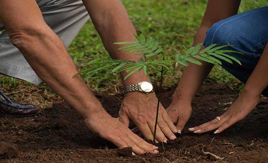 زراعة الكورة توزع 7250 غرسة حرجية على المواطنين
