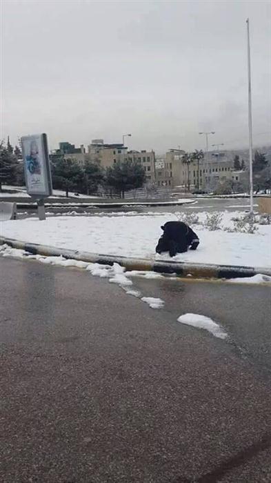 بالصور شرطي أردني يصلي الثلج 239d3b395034ba00be0b4e5598356bec.jpg