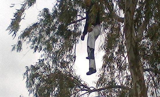 العثور على جثة معلقة بشجرة في الزرقاء