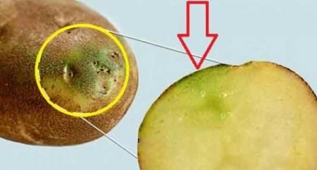 نتيجة بحث الصور عن وفاة عائلة بسبب البطاطس