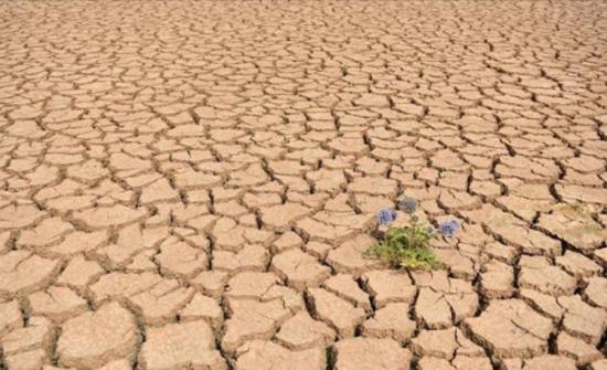 موجة جفاف تضرب شمال شرقي الصين