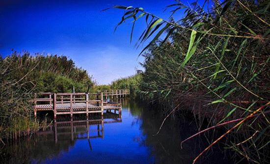 الاحتفال باليوم العالمي للأراضي الرطبة في محمية الازرق المائية