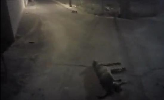 بالفيديو : شرطي أمريكي يستخدم سلاحه في قتل كلب أمام مالكته
