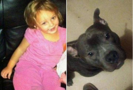 بالصور.. كلب 'البيتبول' نهش ابنة الـ 3 سنوات حتى الموت... 'أنا متأسف جداً لما حصل لك أحبك جداً يا طفلتي الصغيرة'