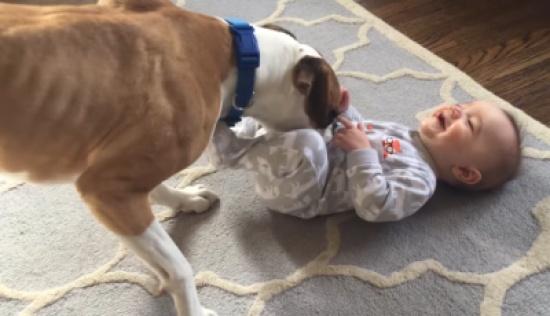 فيديو| لن تصدّقوا ماذا يفعل هذا الكلب مع الرضيع ذو الـ9 أشهر!