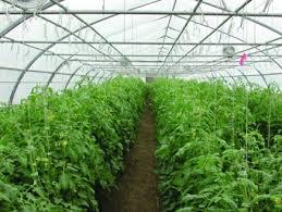 بحث التعاون مع القطاع الخاص في تنفيذ مشاريع زراعية صغيرة