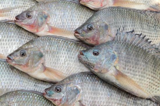 لا تخزّن الأسماك في الثلاجة قبل القيام بهذه الحيلة البسيطة!