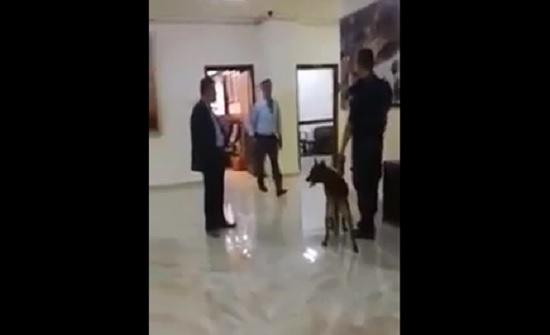 بالفيديو : كلاب بوليسية لتفتيش بلدية اربد ومياه اليرموك قبيل زيارة الرزاز