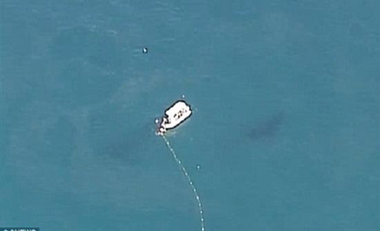 بالفيديو : إنقاذ حوت من شباك أسماك القرش في أستراليا