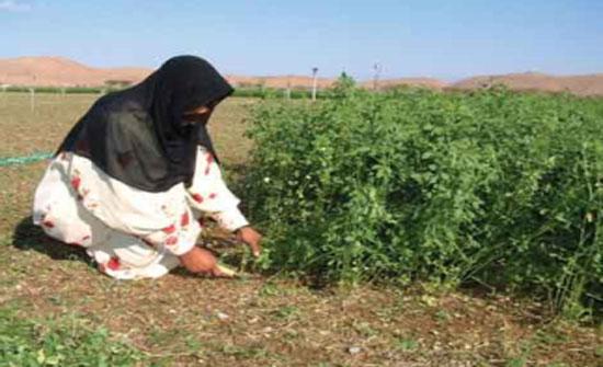 394 ألف امرأة أردنية يعشن في المناطق الريفية
