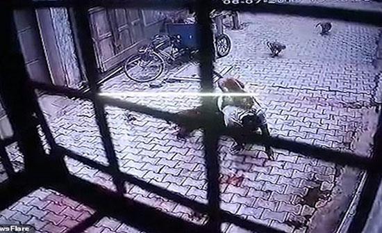 """قرود"" تهاجم رجلا عائدا إلى منزله (فيديو)"