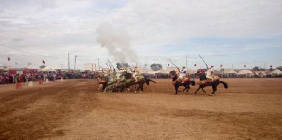 بالفيديو: حصان يسقط فارساً ويدهس العشرات بالمغرب