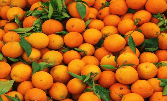 اطلاق مهرجان البرتقال الرابع