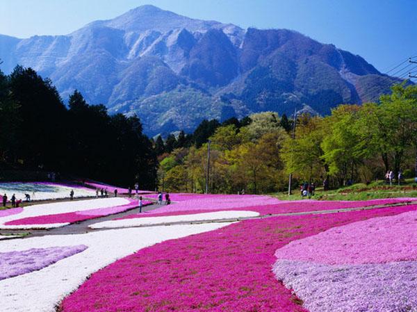 صور: أكثر الأماكن الملونة على الأرض 44485d0864d4317d49abf0c8b84d27a1